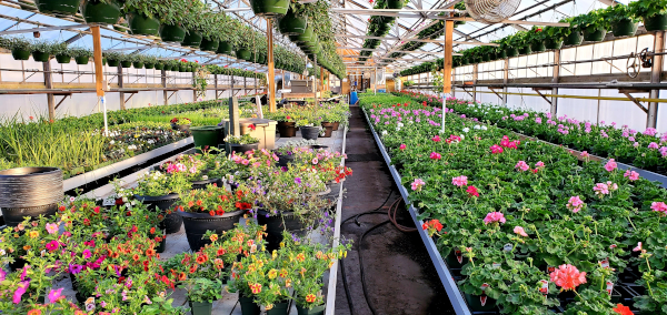 A display of potted plants in a greenhouse.